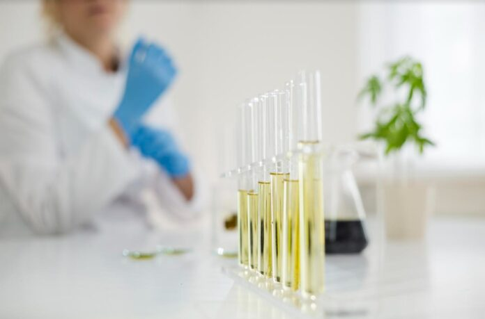 cannabis medicinal - neturuguay